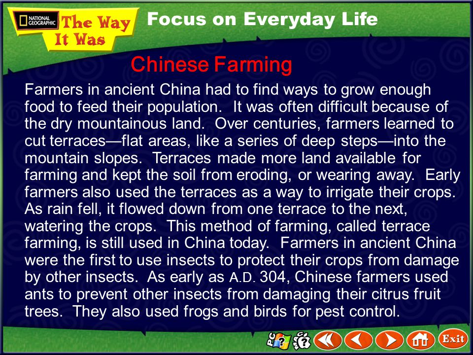 Chinese Farming Focus on Everyday Life