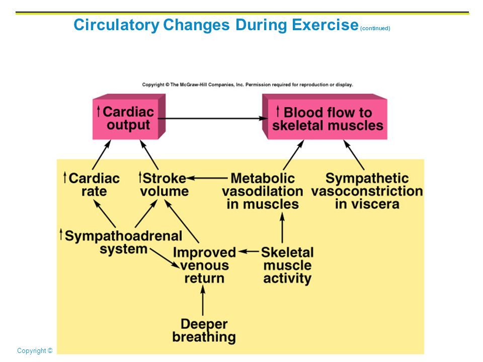 Circulatory Changes During Exercise (continued)