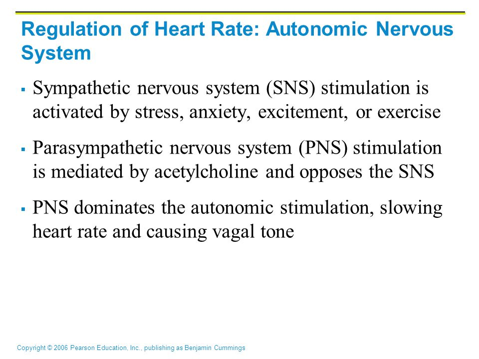 Regulation of Heart Rate: Autonomic Nervous System