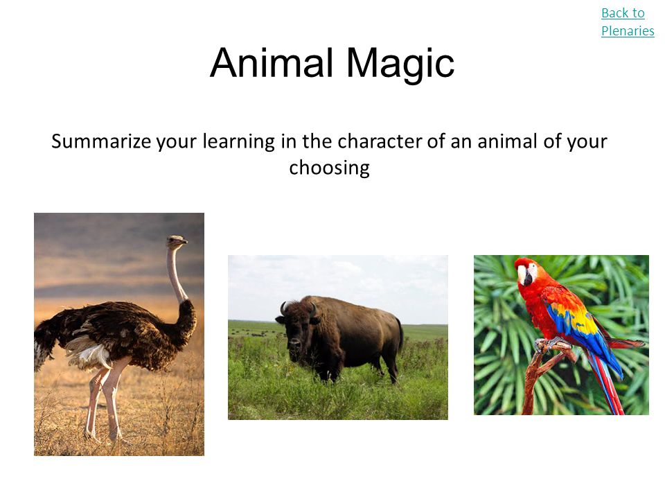 Summarize your learning in the character of an animal of your choosing