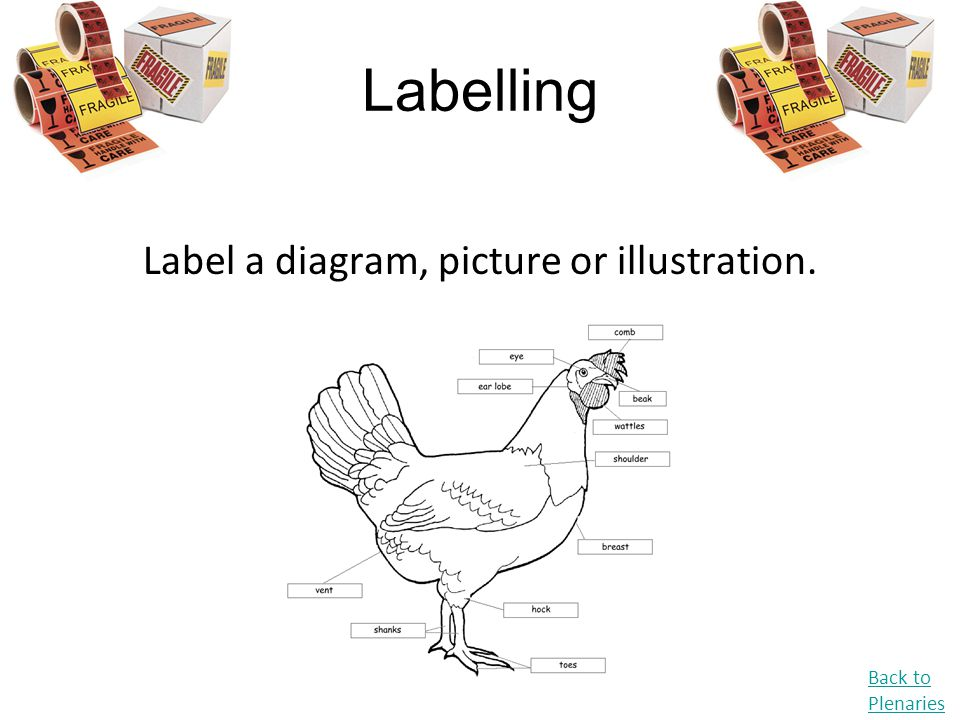 Label a diagram, picture or illustration.