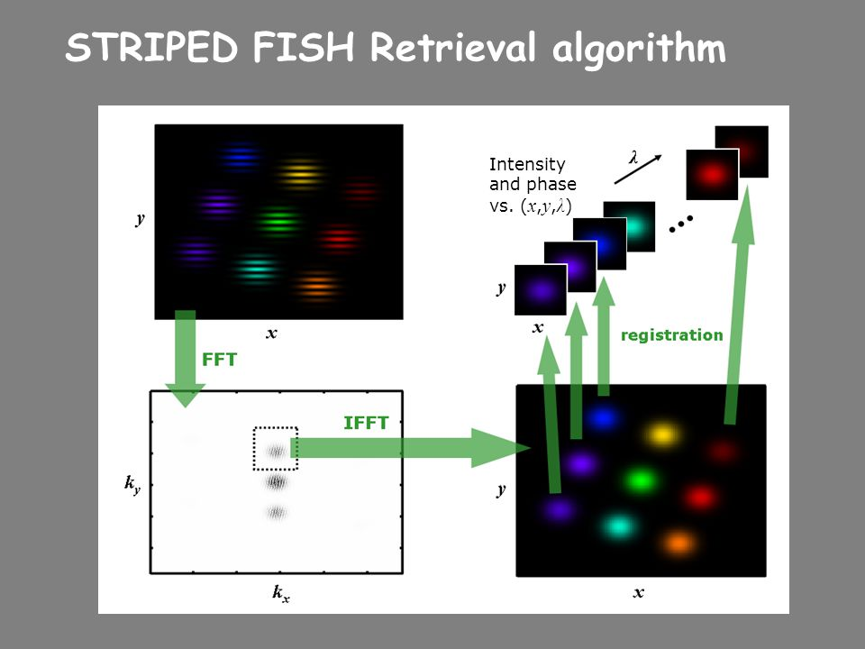 STRIPED FISH Retrieval algorithm