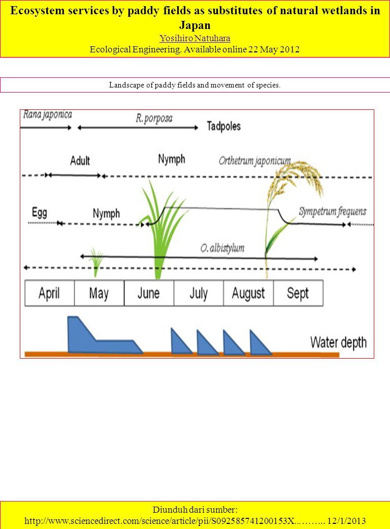 Ecosystem services by paddy fields as substitutes of natural wetlands in Japan