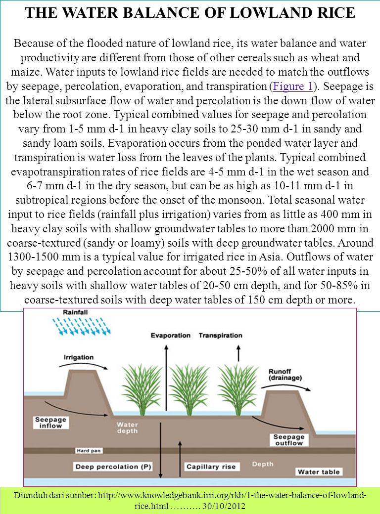 THE WATER BALANCE OF LOWLAND RICE