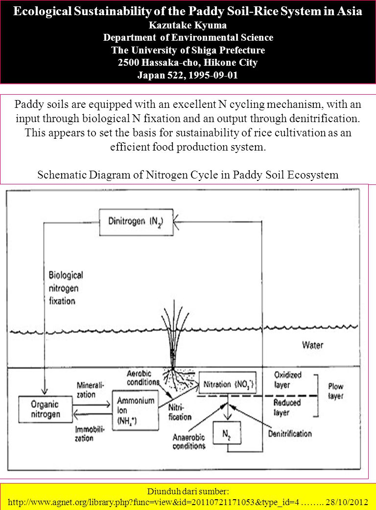 Schematic Diagram of Nitrogen Cycle in Paddy Soil Ecosystem