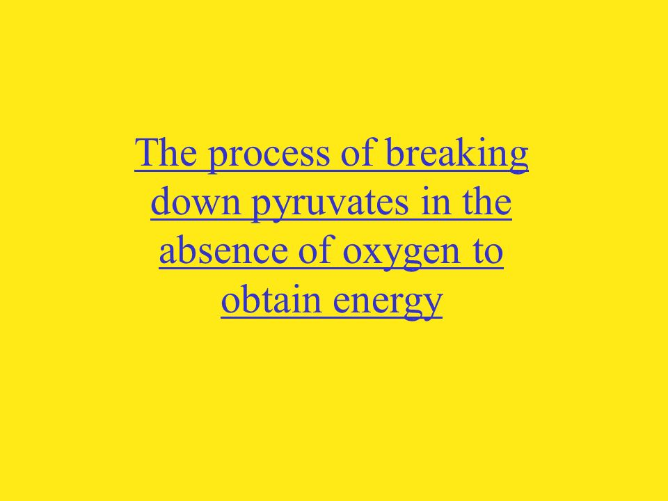 The process of breaking down pyruvates in the absence of oxygen to obtain energy