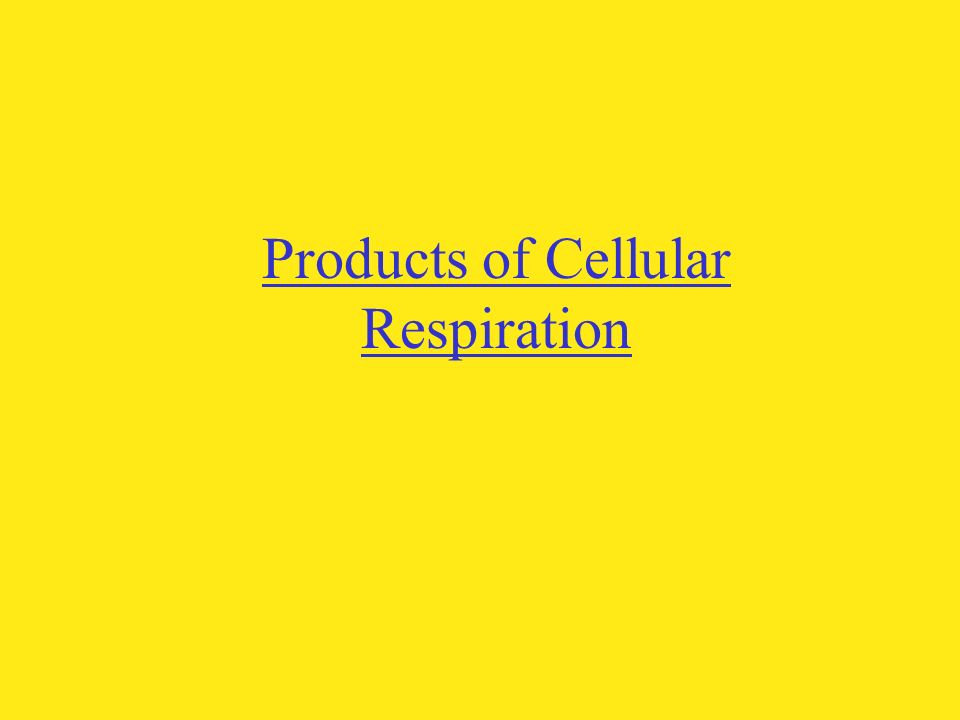 Products of Cellular Respiration