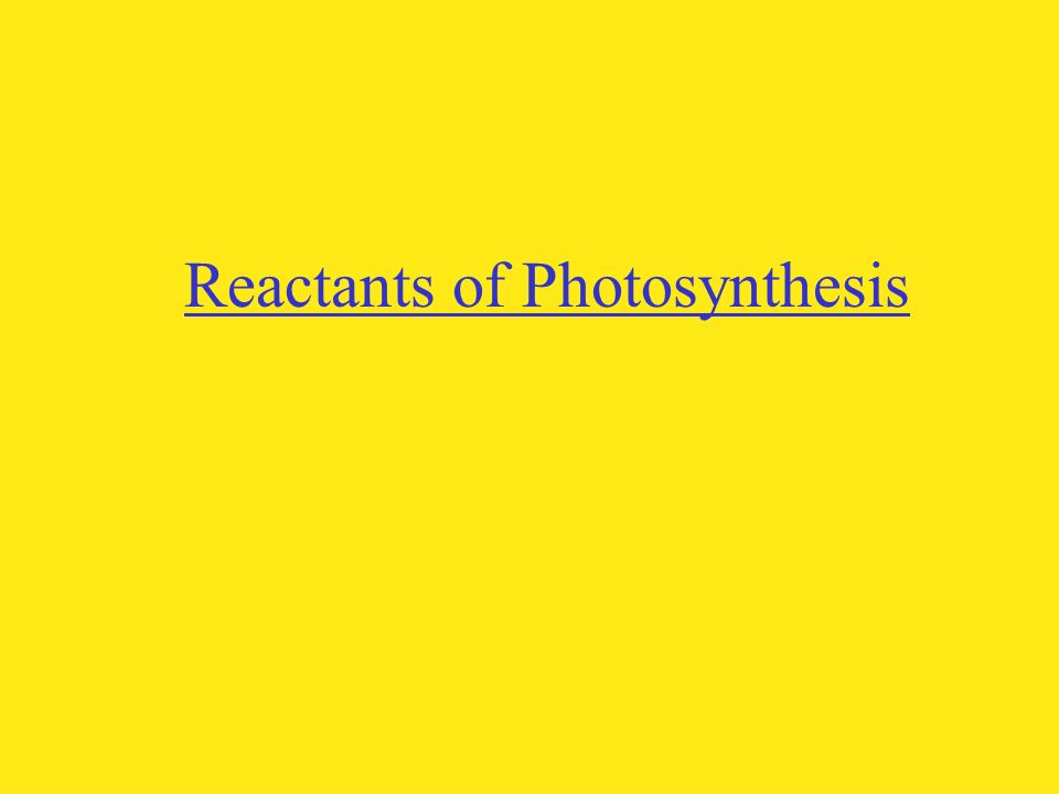 Reactants of Photosynthesis