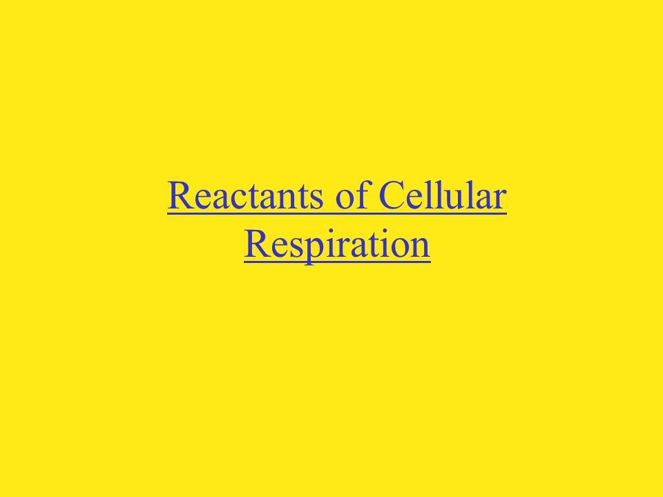 Reactants of Cellular Respiration