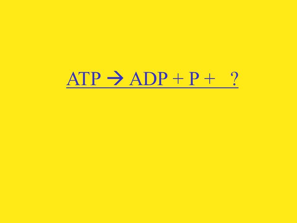 ATP  ADP + P +
