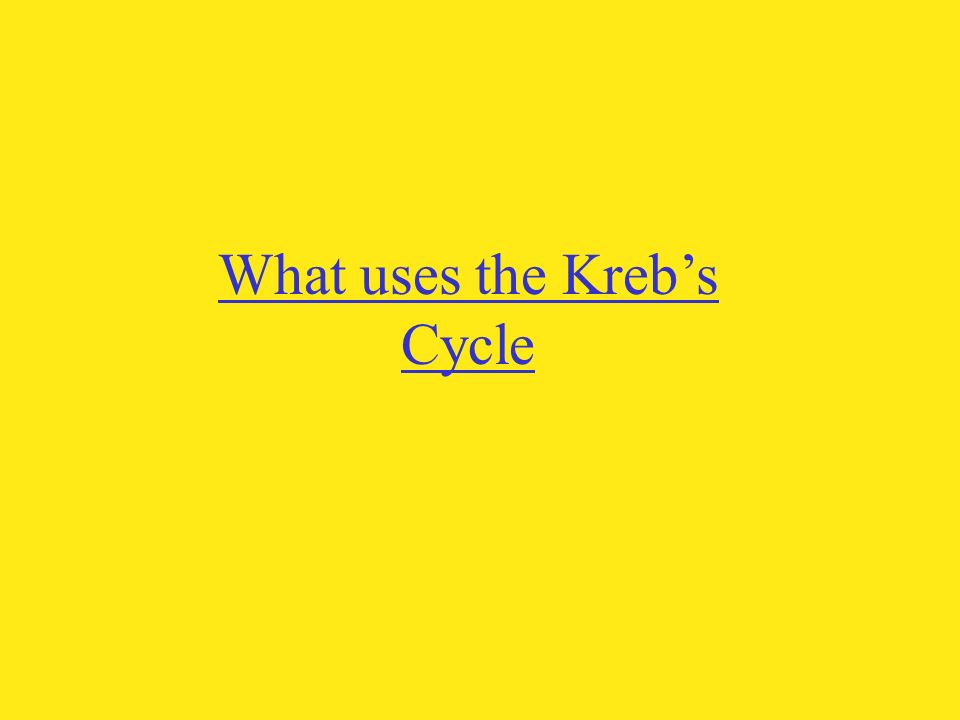 What uses the Kreb's Cycle