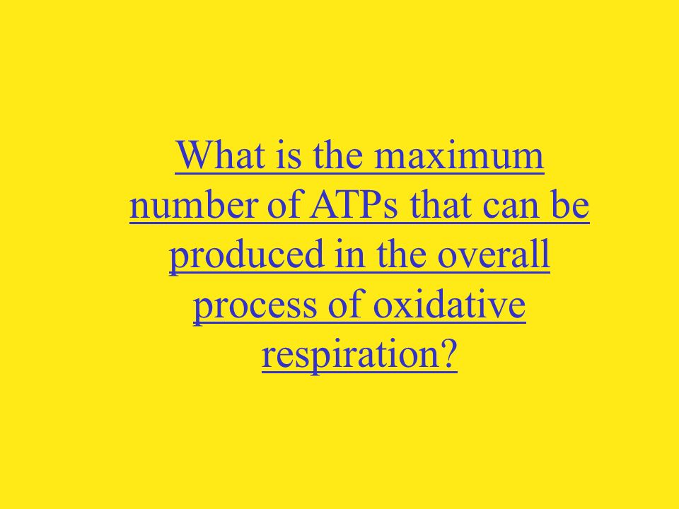 What is the maximum number of ATPs that can be produced in the overall process of oxidative respiration