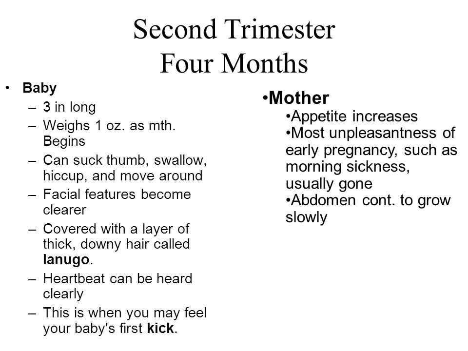 Second Trimester Four Months
