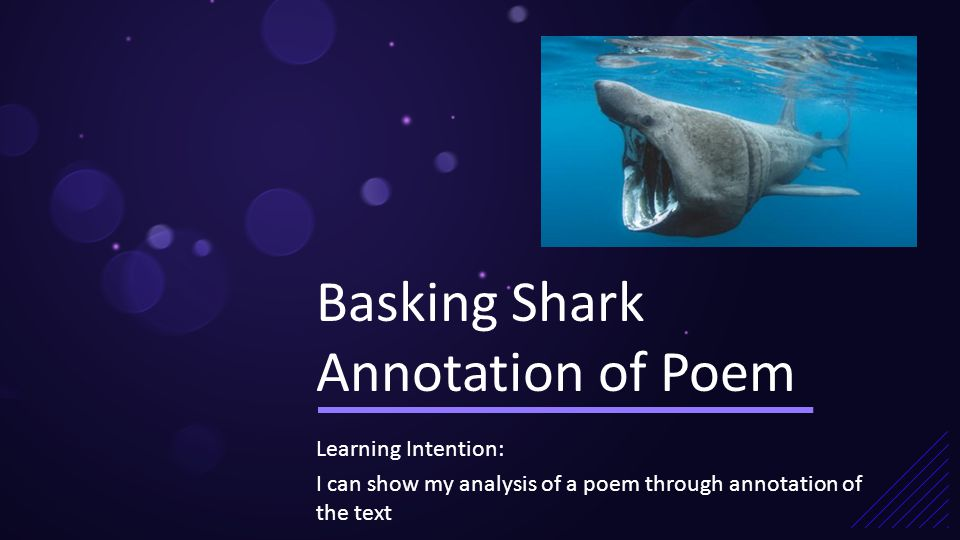 basking shark by norman maccaig is Basking shark norman maccaig essay семен solstice - scotland's basking sharks - duration: 5:01 simon spear 796,720 views 5:01.
