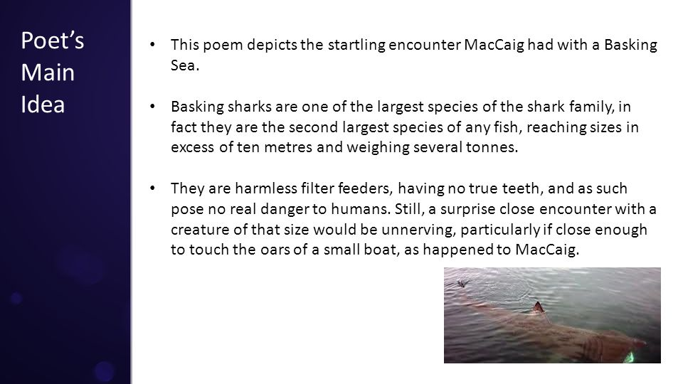 Poet's Main Idea This poem depicts the startling encounter MacCaig had with a Basking Sea.