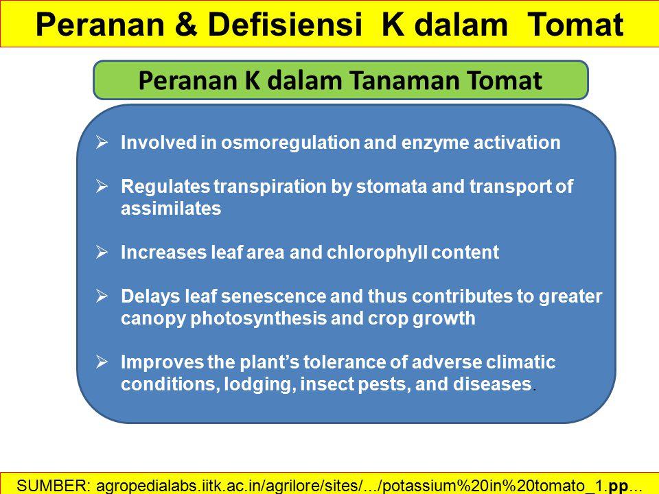 Peranan & Defisiensi K dalam Tomat