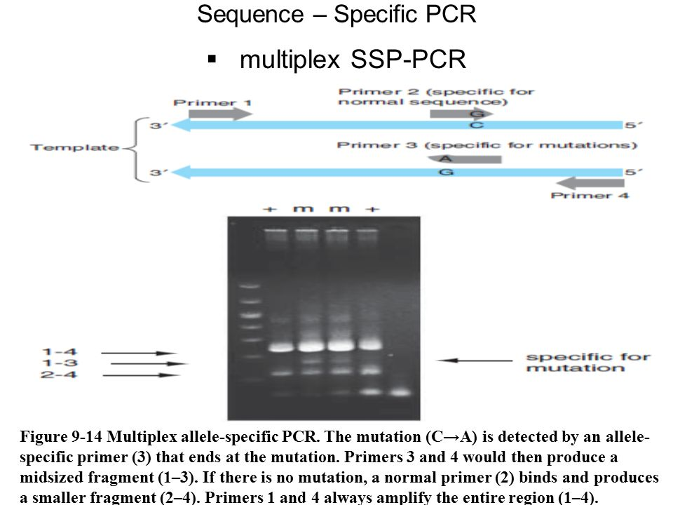 Sequence – Specific PCR