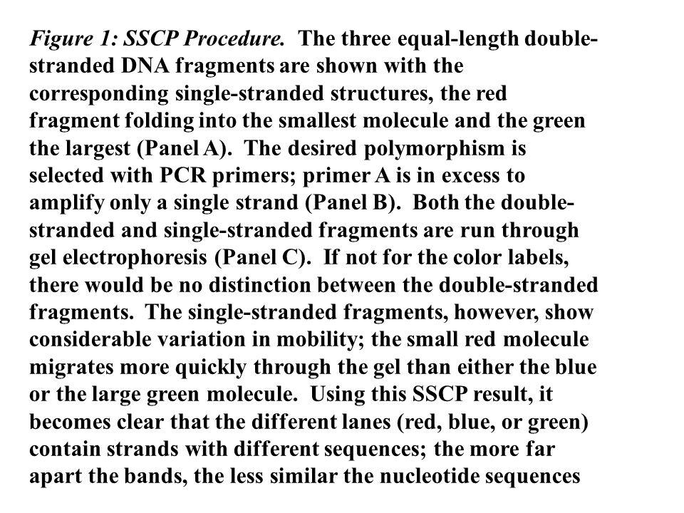 Figure 1: SSCP Procedure