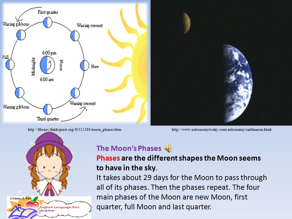 Phases are the different shapes the Moon seems to have in the sky.