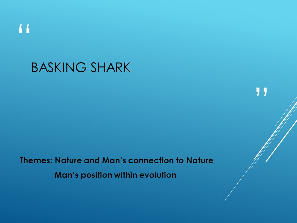 Basking Shark Themes: Nature and Man's connection to Nature