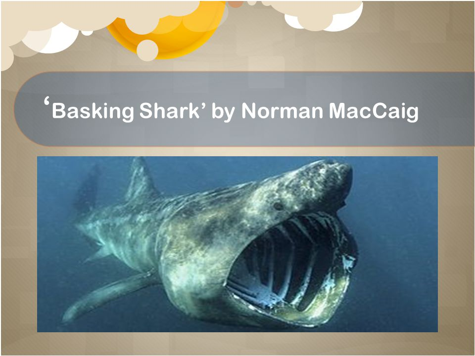'Basking Shark' by Norman MacCaig