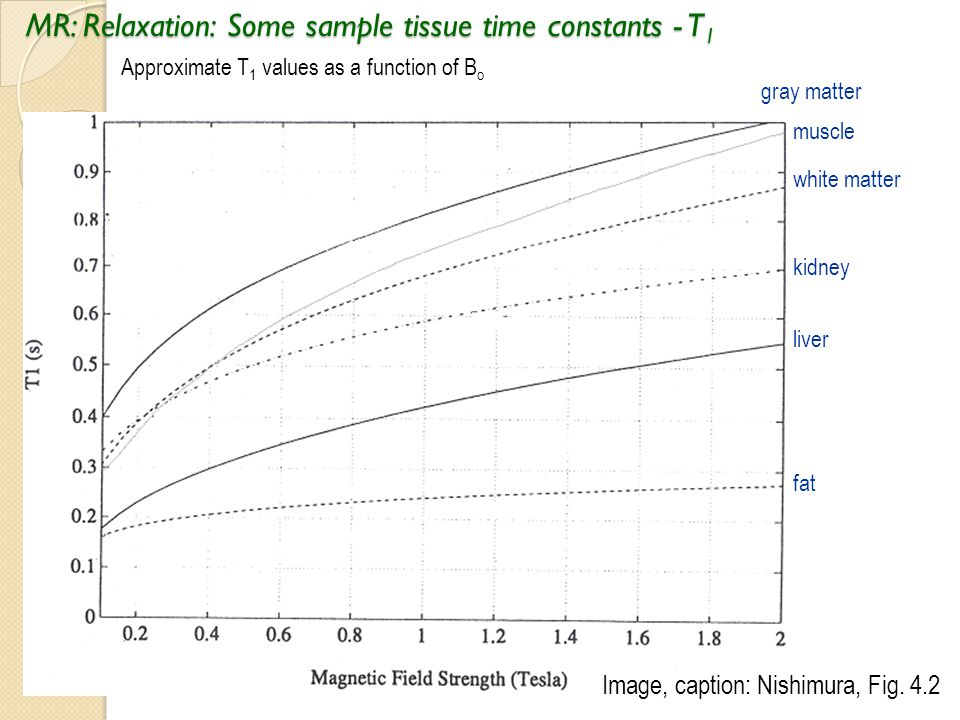 MR: Relaxation: Some sample tissue time constants - T1