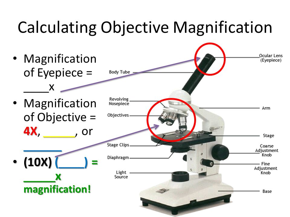 Calculating Objective Magnification