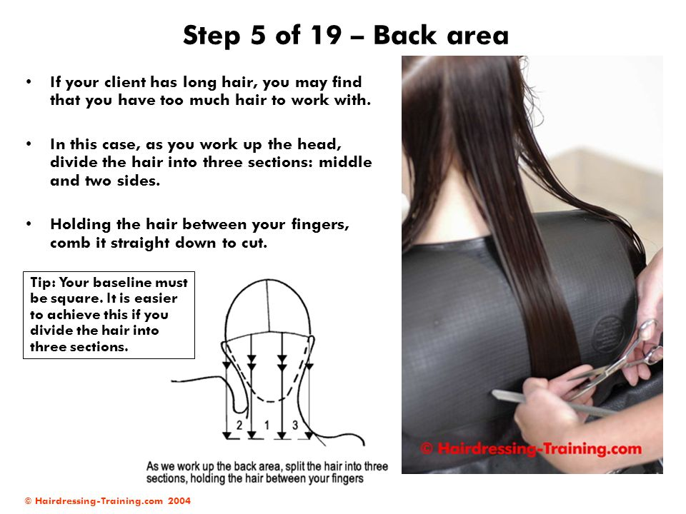 Step 5 of 19 – Back area If your client has long hair, you may find that you have too much hair to work with.