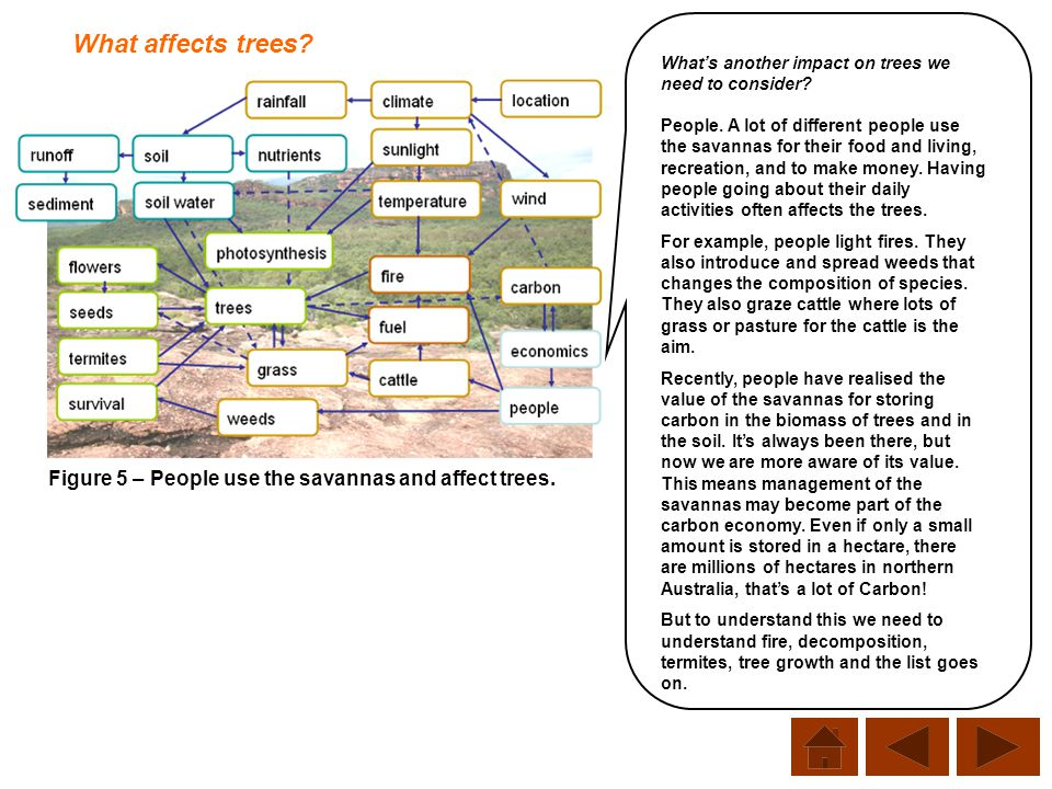 What affects trees What's another impact on trees we need to consider