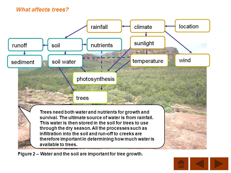 What affects trees