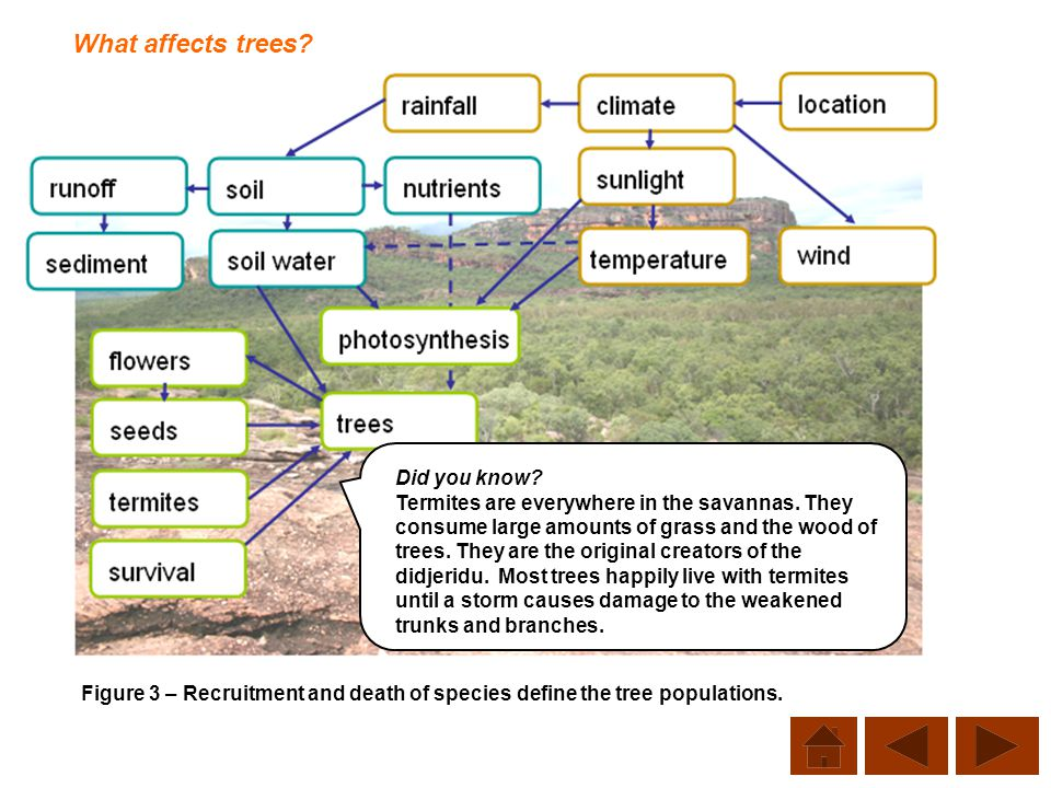What affects trees Did you know