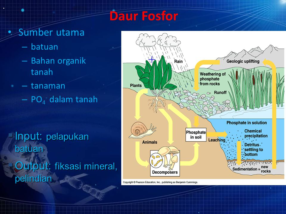 Daur Fosfor + Sumber utama Input: pelapukan batuan
