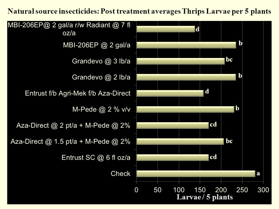 Natural source insecticides: Post treatment averages Thrips Larvae per 5 plants