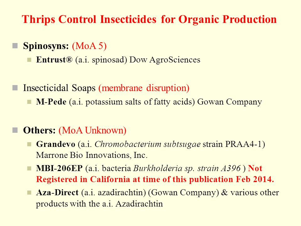 Thrips Control Insecticides for Organic Production