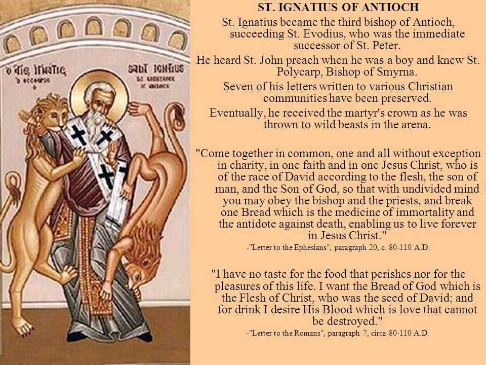 ST. IGNATIUS OF ANTIOCH St. Ignatius became the third bishop of Antioch, succeeding St. Evodius, who was the immediate successor of St. Peter.