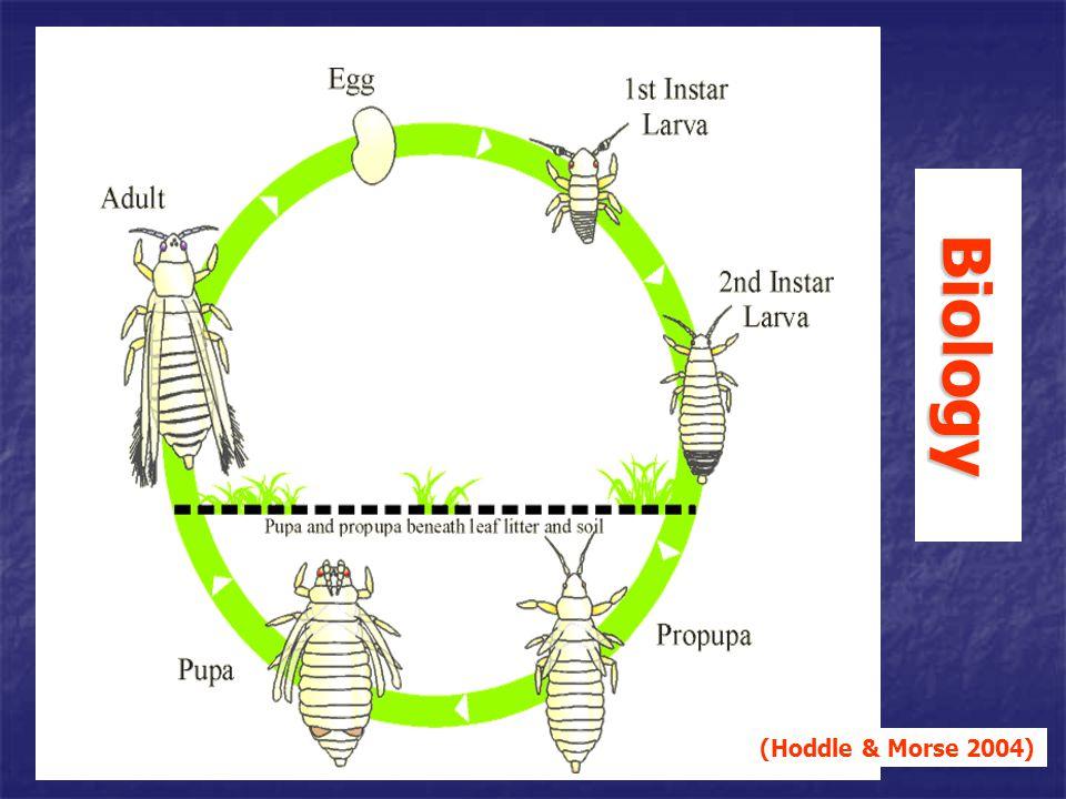 Biology (Hoddle & Morse 2004)