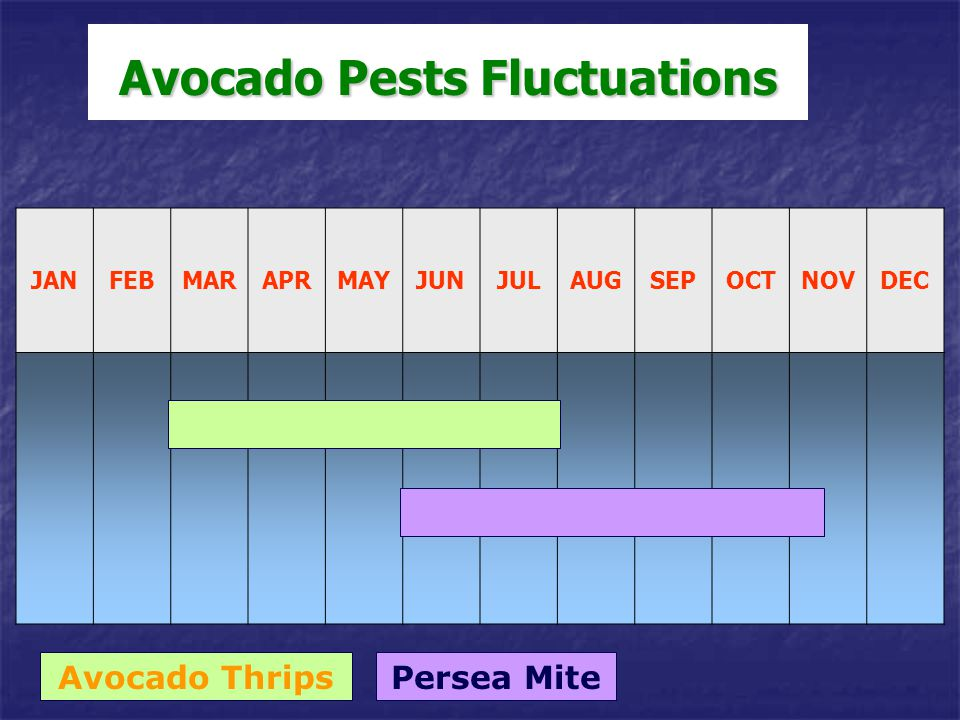 Avocado Pests Fluctuations