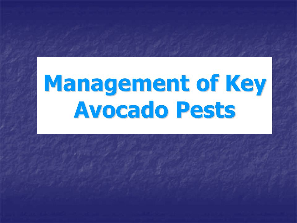 Management of Key Avocado Pests