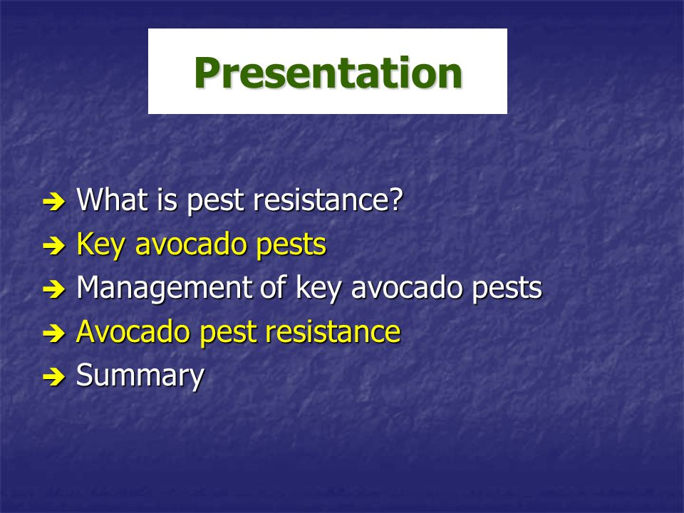 Presentation What is pest resistance Key avocado pests