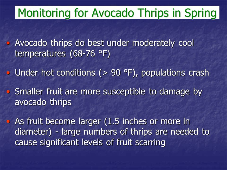 Monitoring for Avocado Thrips in Spring