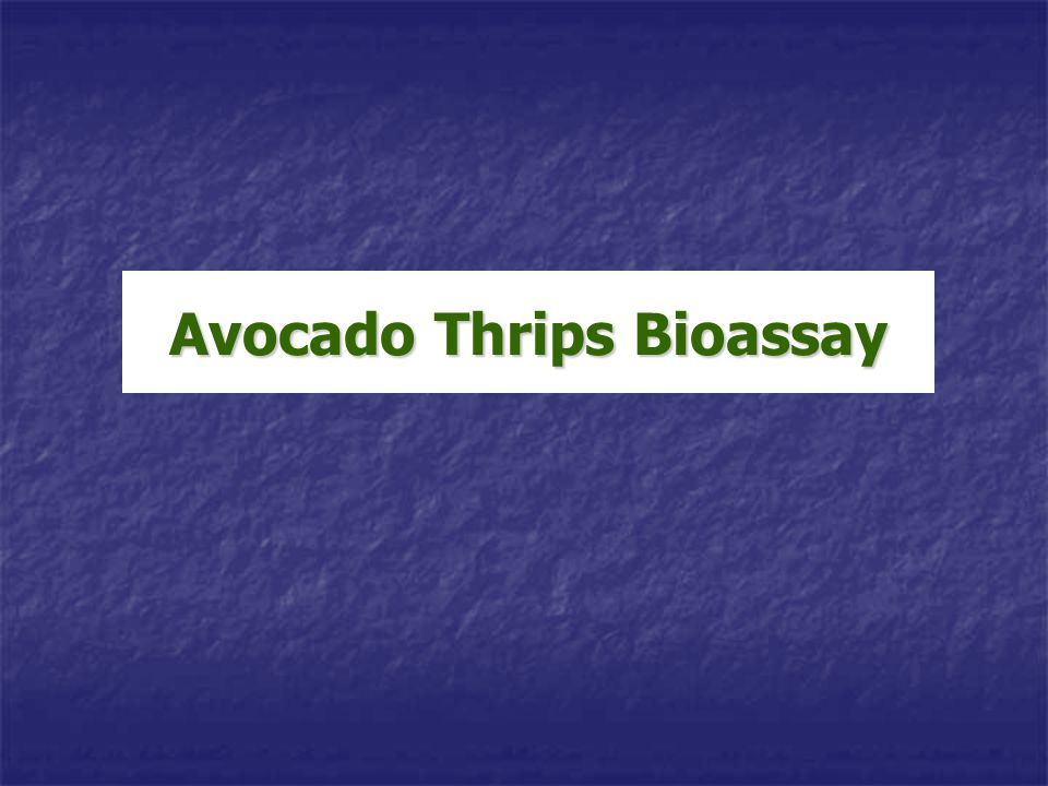 Avocado Thrips Bioassay