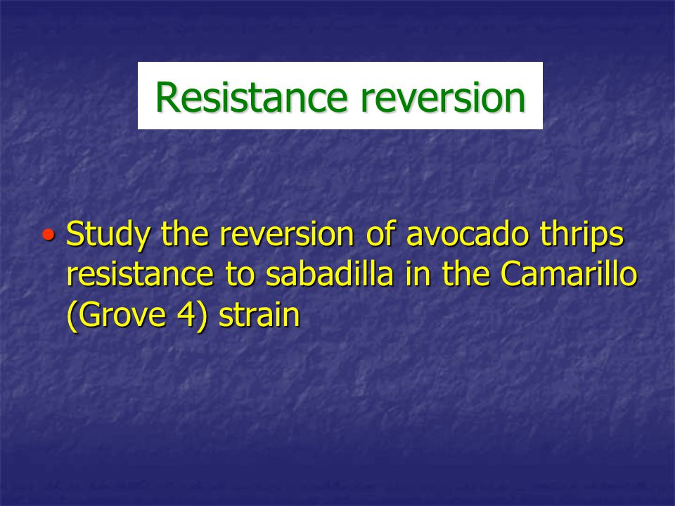Resistance reversion Study the reversion of avocado thrips resistance to sabadilla in the Camarillo (Grove 4) strain.
