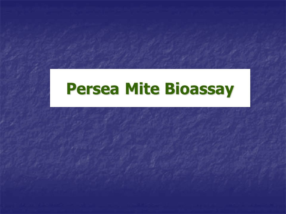 Persea Mite Bioassay