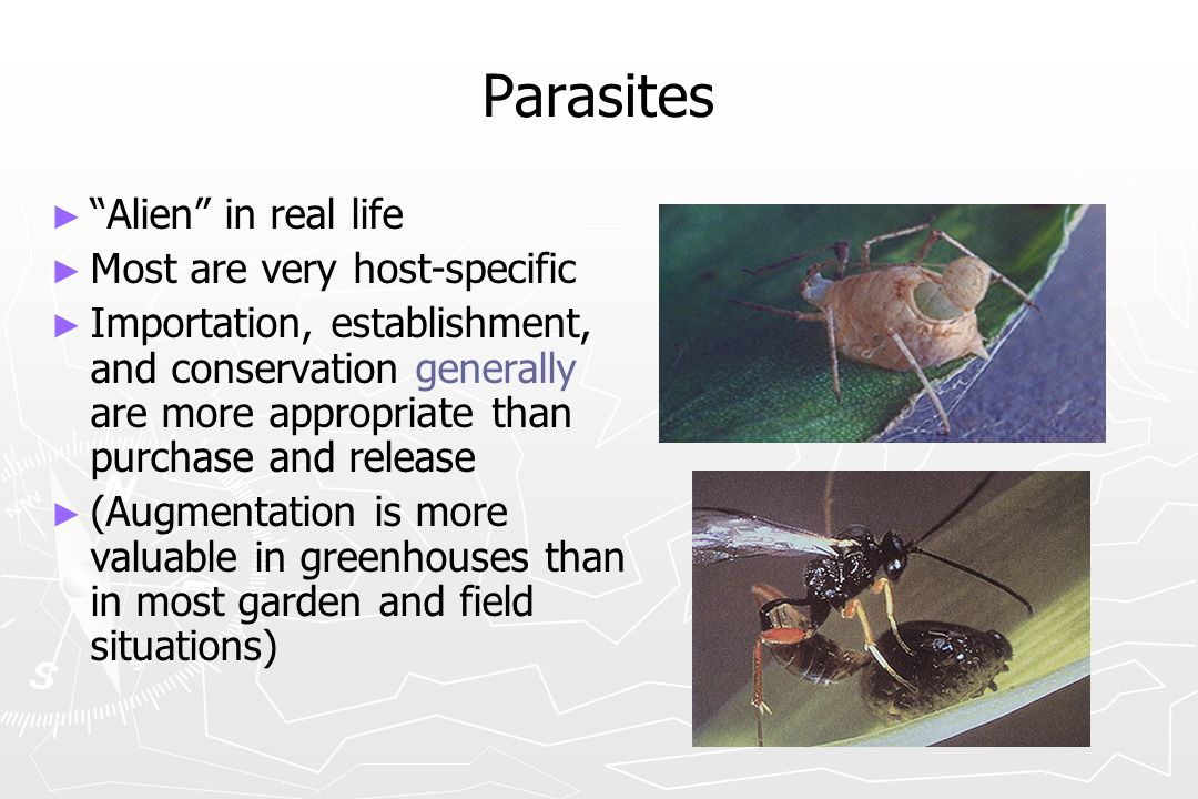 Parasites Alien in real life Most are very host-specific