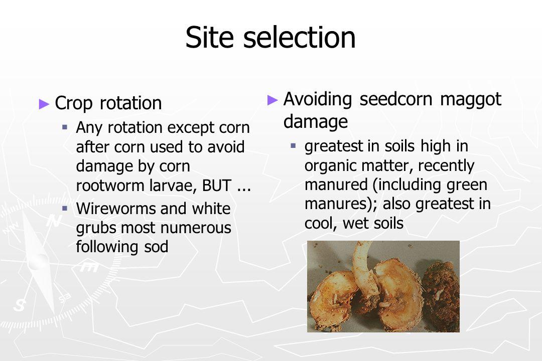 Site selection Avoiding seedcorn maggot damage Crop rotation