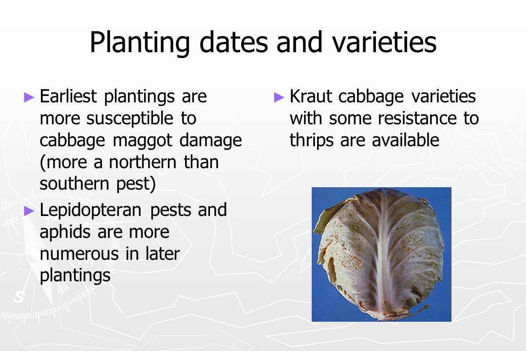 Planting dates and varieties