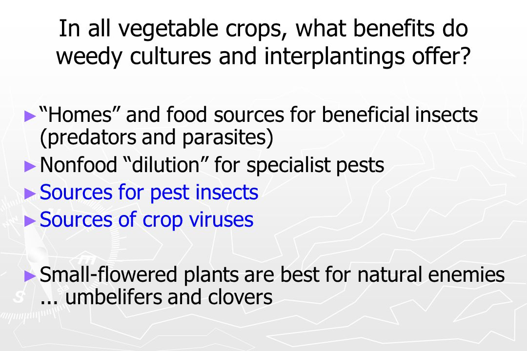In all vegetable crops, what benefits do weedy cultures and interplantings offer