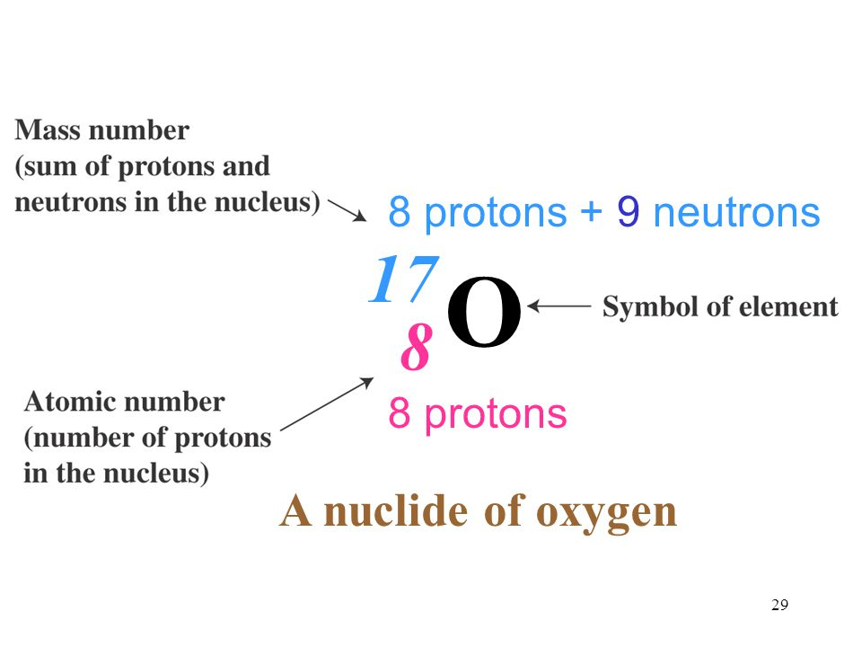 8 protons + 9 neutrons 17 O 8 8 protons A nuclide of oxygen