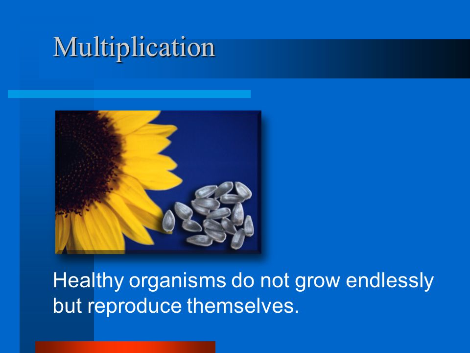 Multiplication Healthy organisms do not grow endlessly but reproduce themselves.