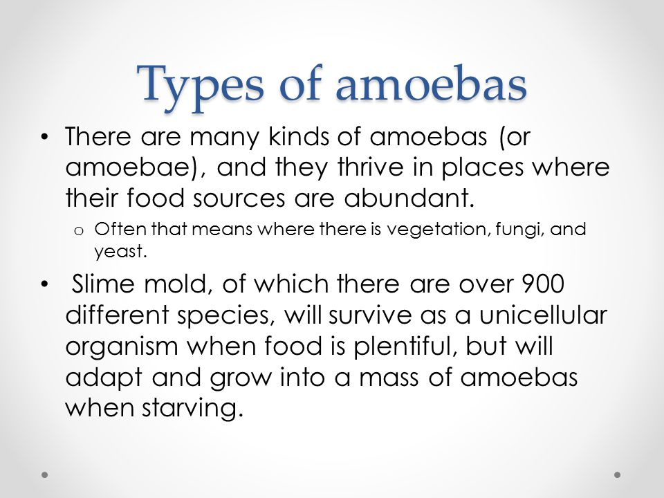 Types of amoebas There are many kinds of amoebas (or amoebae), and they thrive in places where their food sources are abundant.